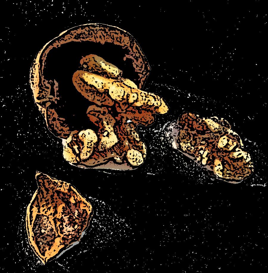 Tiko-walnuts.png