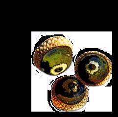acorns2.png