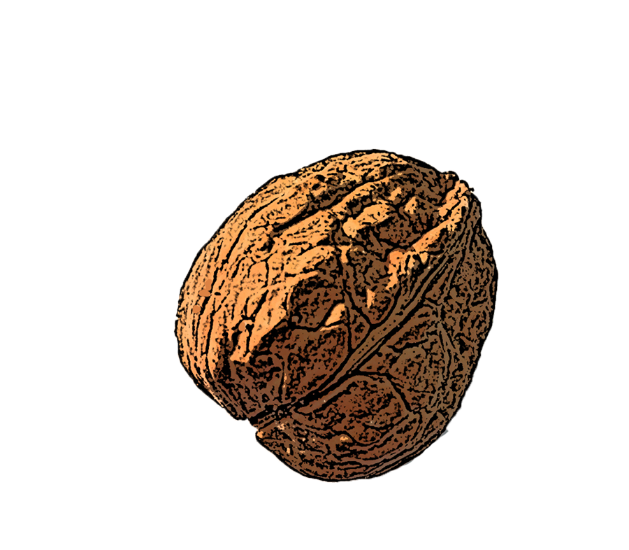 Walnut-Transparent.png