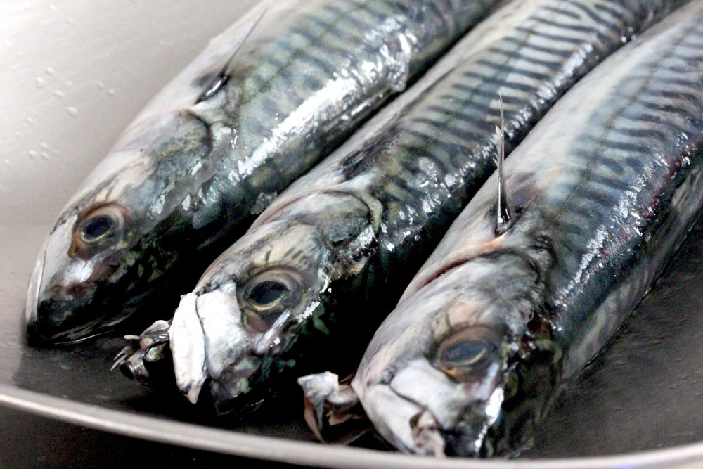 Fresh local mackerel
