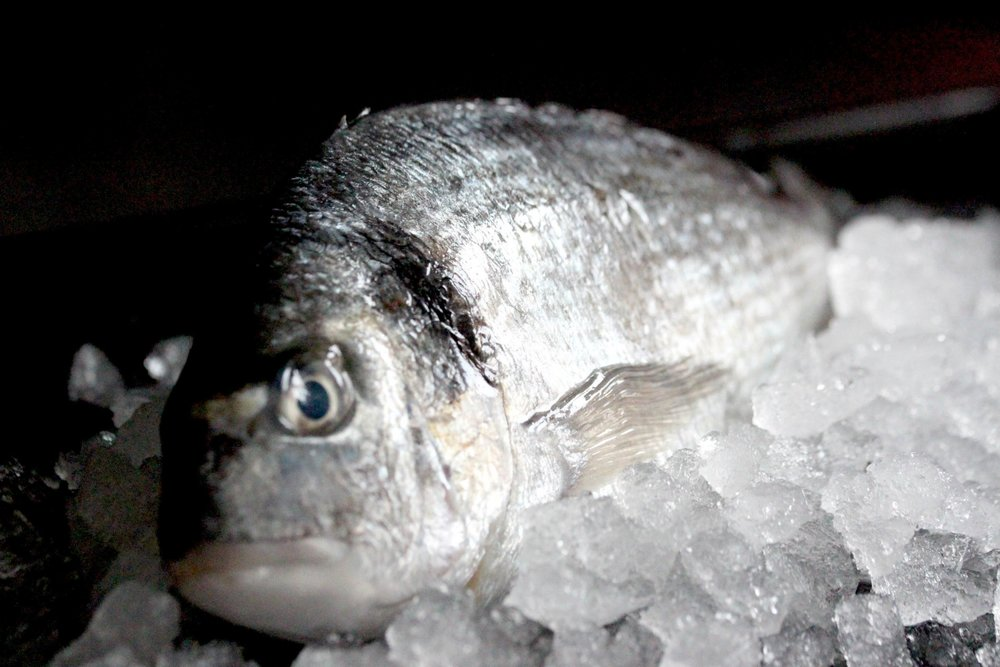 Sea bream gilt-head