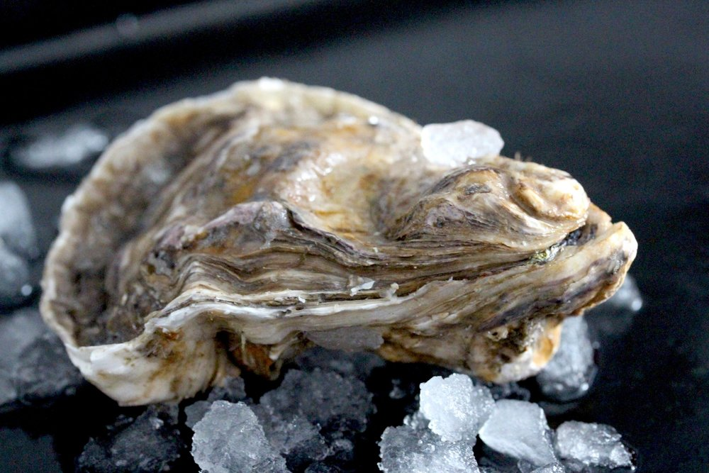 fresh oysters native and rock