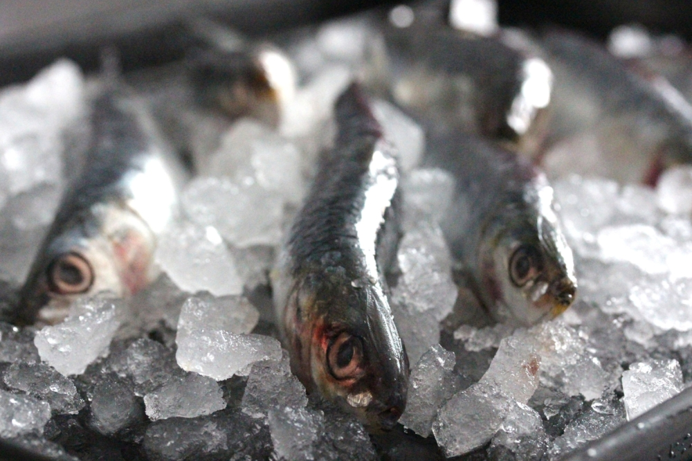 oily fish - Herring: £7.04Mackerel: £7.70Sardines (whole): £7.70Sardines fillets: £9.90