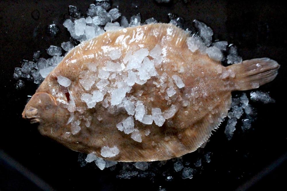 Flat fish - Brill: £16.50Dabs: £7.04Dover sole: £24.16Dover slip sole: £12.98Halibut: £32.00Lemon sole: £16.50Plaice fillets: £14.99Plaice (whole): £8.80Sand sole: £12.98Turbot: £17.16