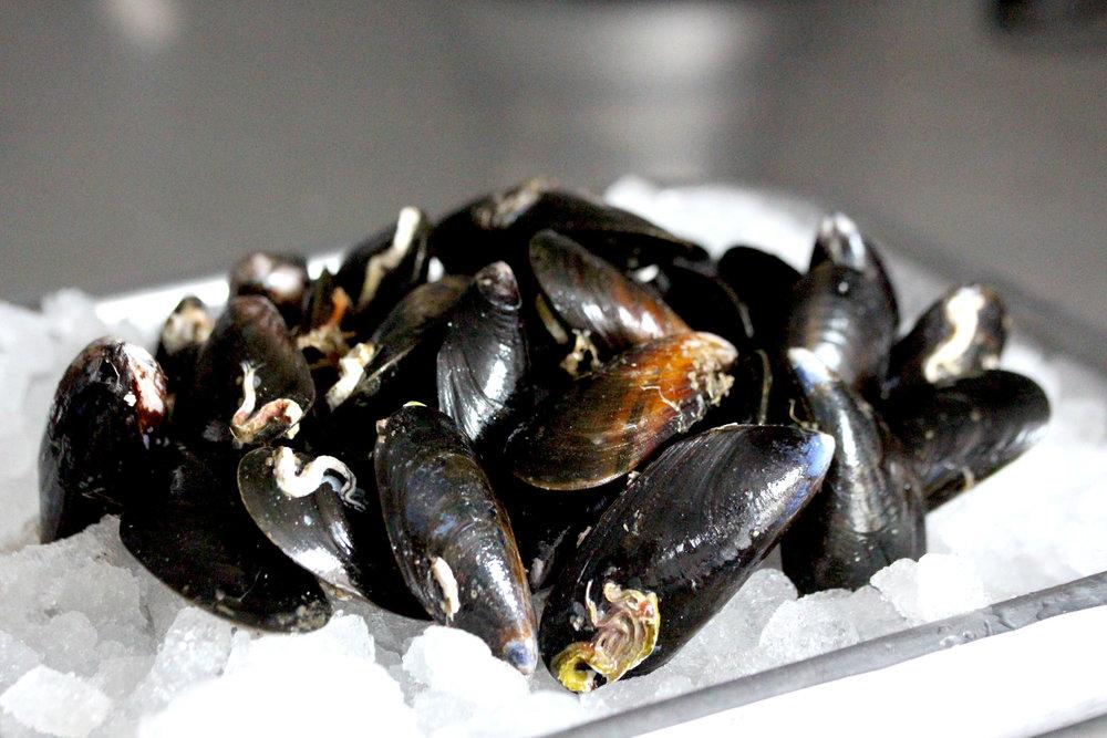 Mussels are still in season and plentiful