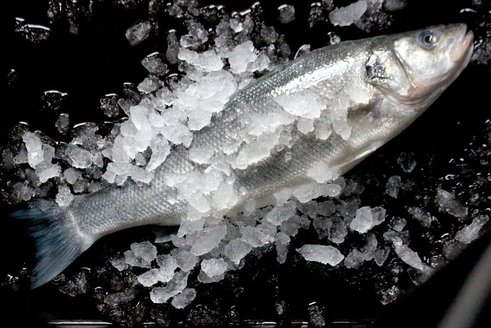 Fresh local sea bass