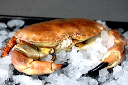 fresh-local-crab