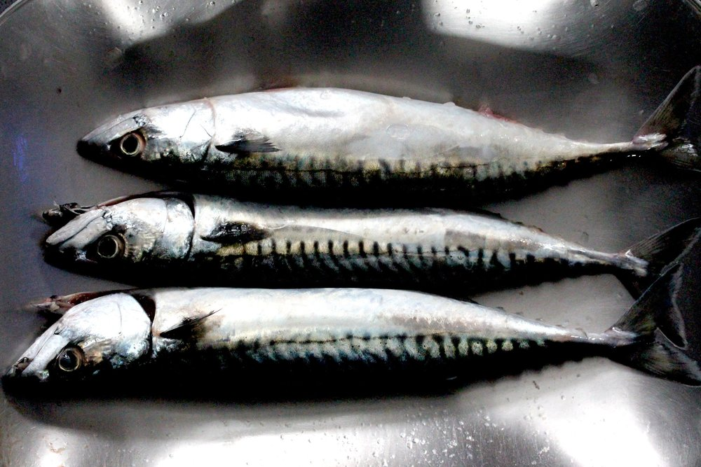 Mackerel aren't just tasty they are surprisingly affordable