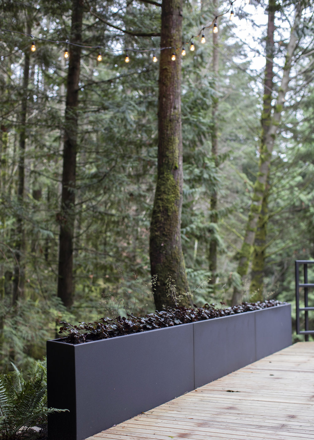 Cypress Falls Residence-Janis Nicolay-3.jpg