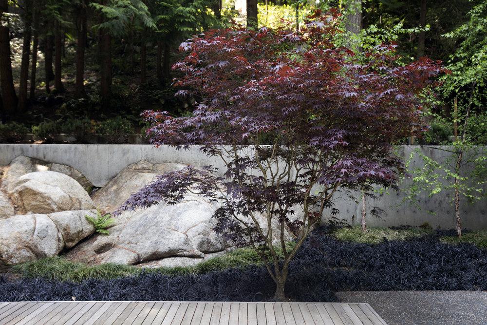 Cypress Falls Residence-Janis Nicolay-14.jpg