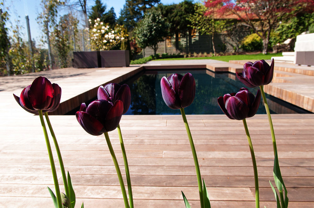 black-tulips_130423-050_KeithRd_NVan_02 2.jpg