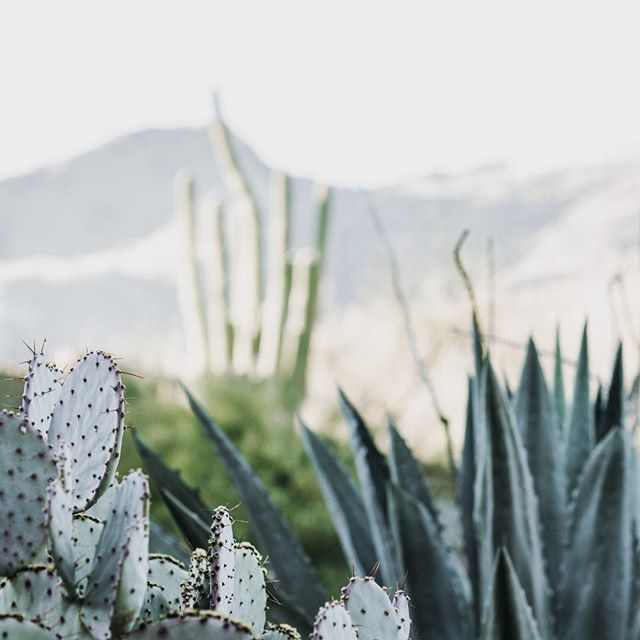 Daydreaming of our upcoming trip to AZ🌵 . . 📷 zelle duda . . . . . #visualdesign #artdirection #creativedirection #graphicdesign #visualcommunication #designstudio #creative #creativedirector #creativestudio #designagency #branding #brandidentity #brandcollateral #freelancelife #printdesign #webdesign #invitationdesign #digitaldesign #logodesign #moderndesign #minimaldesign #minimalbranding #marketingdesign #designersofinstagram