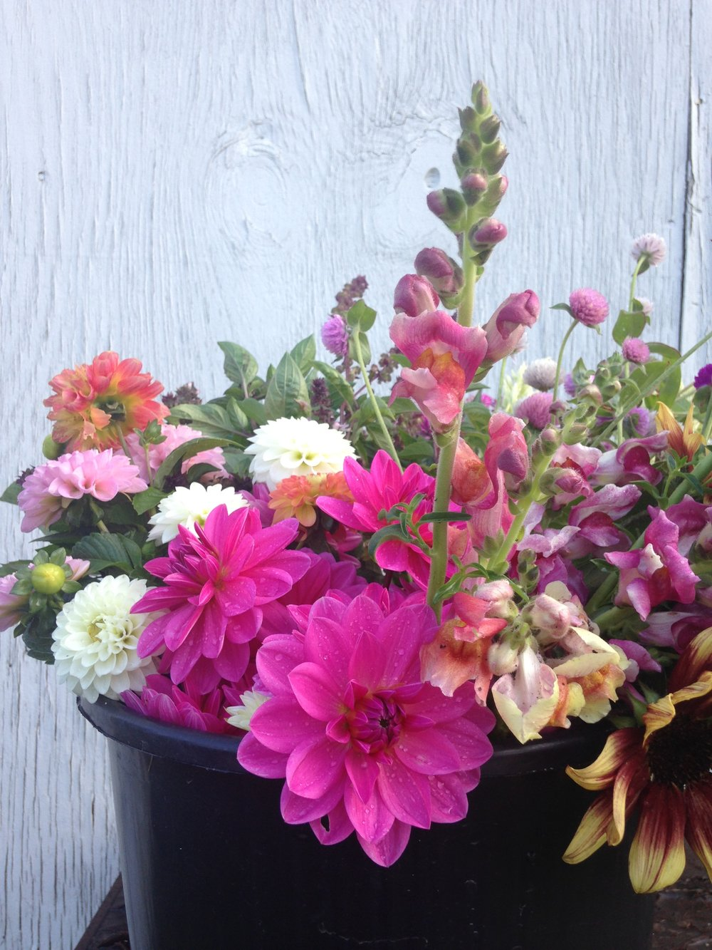 Enjoy local blooms - Find our flowers at local markets or join our flower CSA!