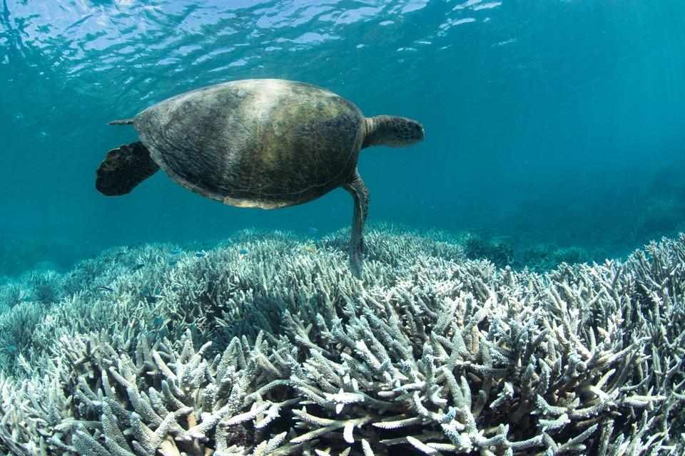 Coral Bleaching -