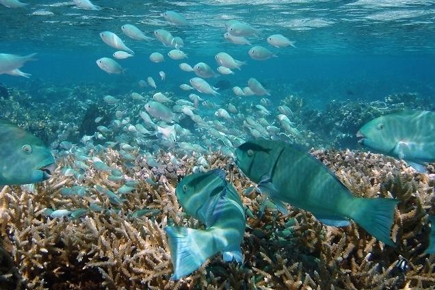 Animals & the Reef -