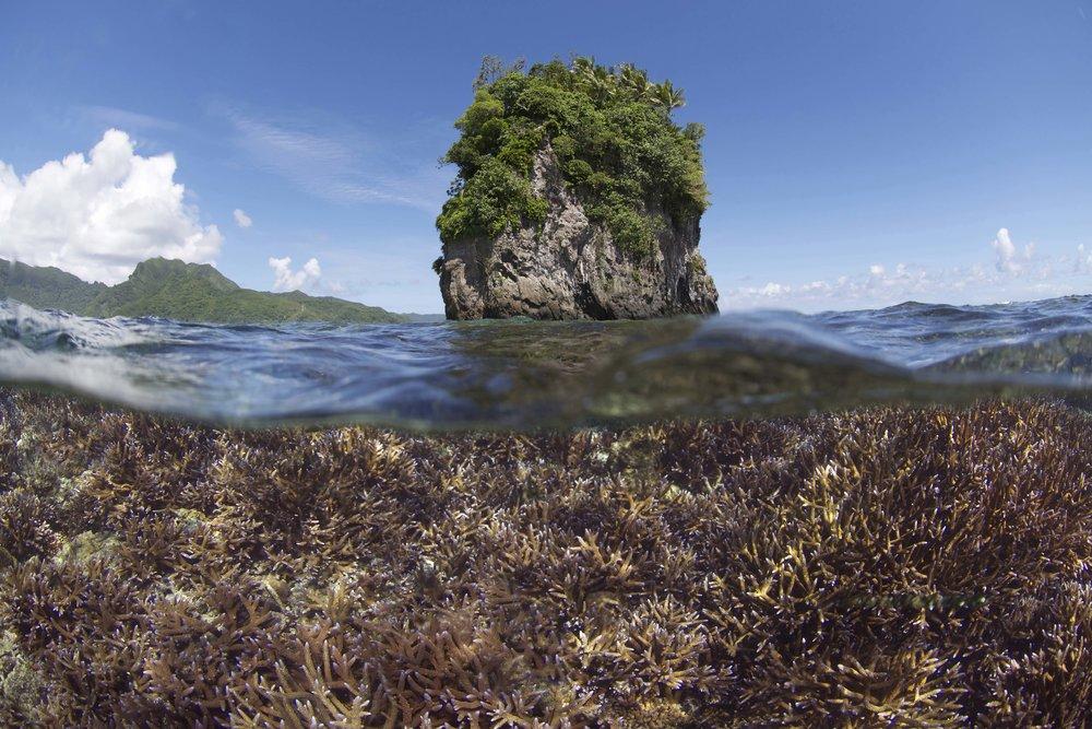DOWNLOAD   -before bleaching - American Samoa - dec 2014 credit: the ocean agency / xl catlin seaview survey