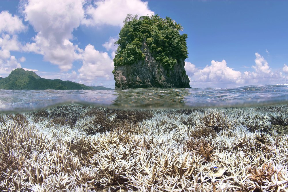 during bleaching - American Samoa - feb 2015 credit: the ocean agency / xl catlin seaview survey