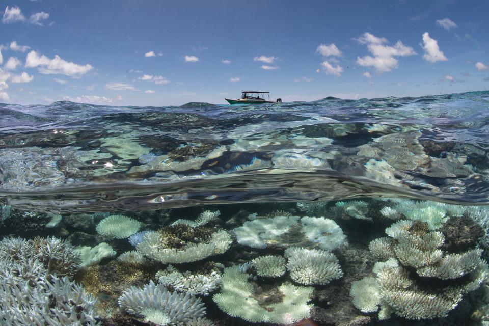 the Maldives, 2016 credit: the ocean agency / xl catlin seaview survey