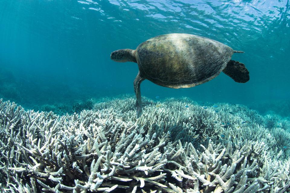 heron island, australia, feb 2016 credit: the ocean agency / xl catlin seaview survey