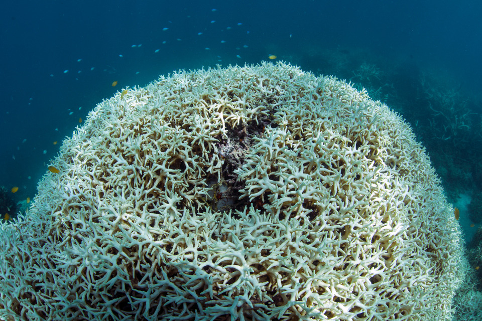 Lizard Island, GBR, mar 2016 credit: THE OCEAN AGENCY / XL CATLIN SEAVIEW SURVEY