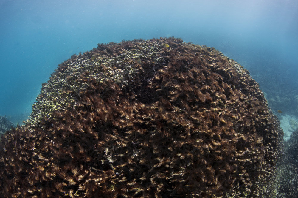 download   - Lizard Island, GBR, may 2016 credit: THE OCEAN AGENCY / XL CATLIN SEAVIEW SURVEY