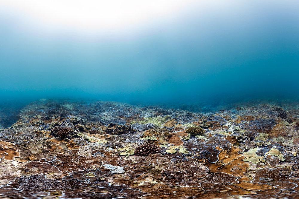 maui, hawaii, aug 2015 credit: THE OCEAN AGENCY / XL CATLIN SEAVIEW SURVEY