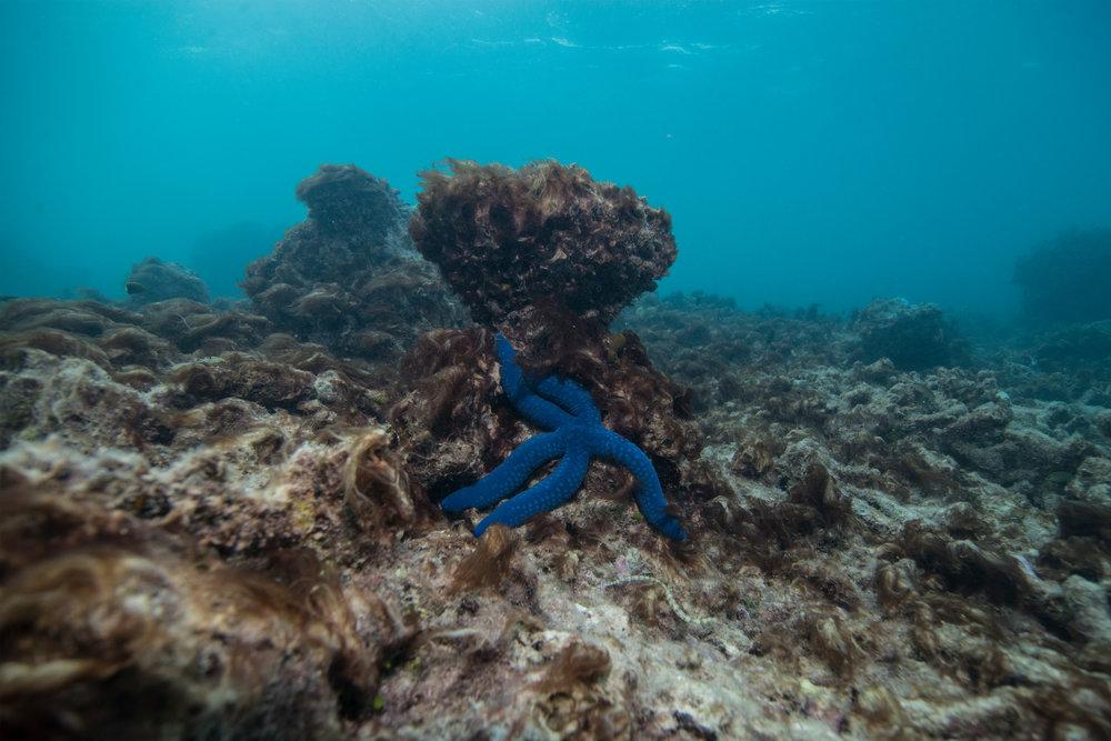 LIZARD island, AUSTRALIA, may 2016 Credit: The Ocean agency / xl catlin seaview survey