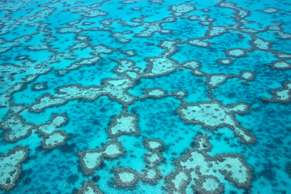 GREAT BARRIER REEF credit: THE OCEAN AGENCY