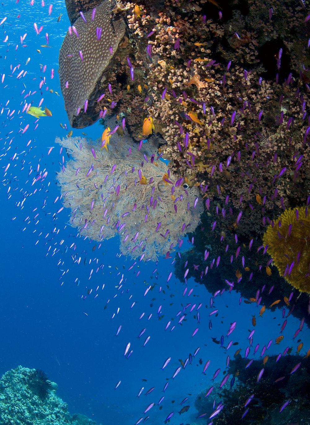 DOWNLOAD   - great barrier reef, australia credit: jayne Jenkins