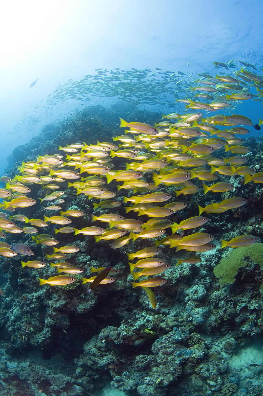 DOWNLOAD   - fish on the reef credit: jayne jenkins