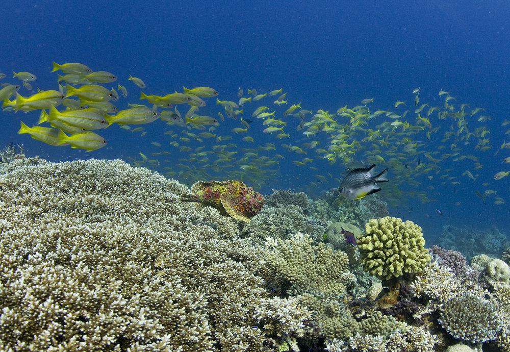 coral reef cREDIT: JAYNE JENKINS