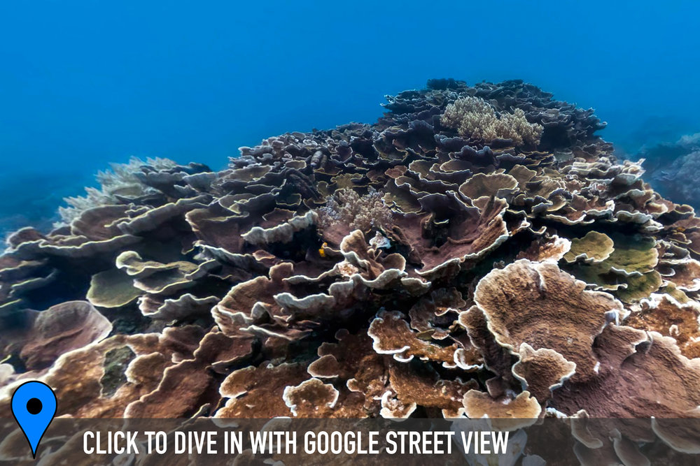 dongi harbor, taiwan Credit: THE OCEAN AGENCY / XL CATLIN SEAVIEW SURVEY