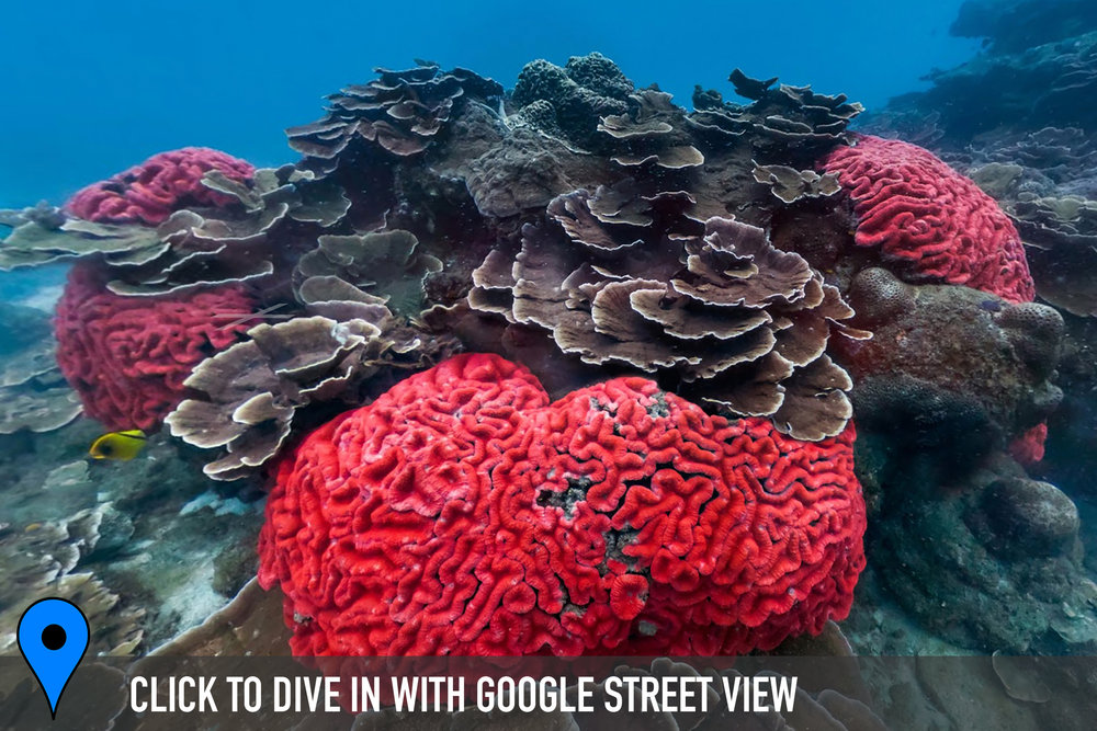 DOWNLOAD   - donghi harbor, taiwan Credit: THE OCEAN AGENCY / XL CATLIN SEAVIEW SURVEY