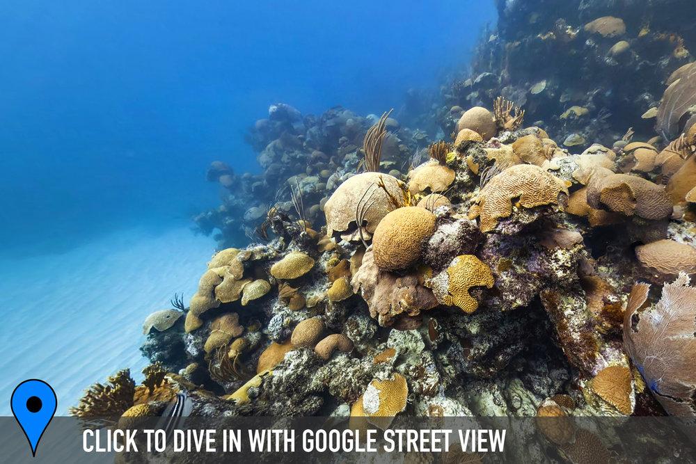 DOWNLOAD   - emily's pinnacles, bermuda Credit: THE OCEAN AGENCY / XL CATLIN SEAVIEW SURVEY