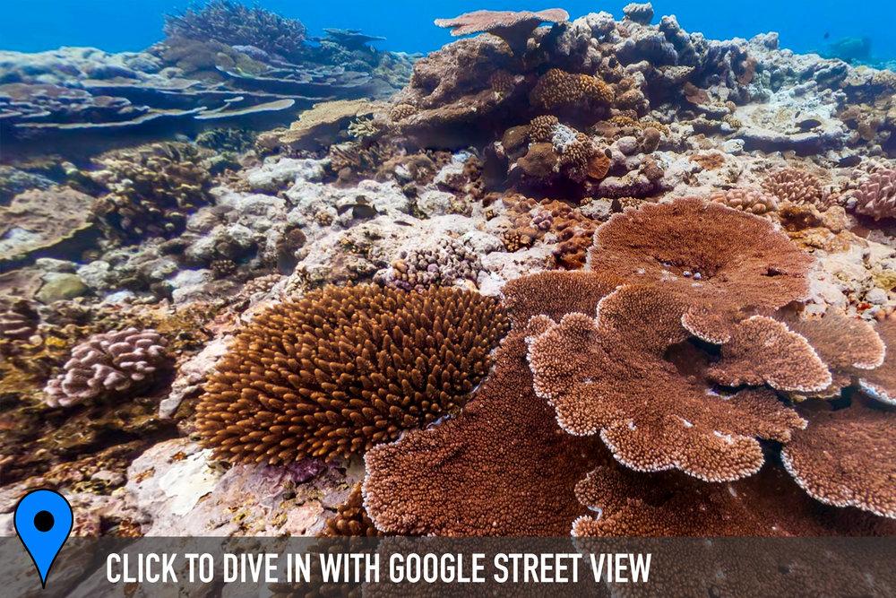 fagatele bay, american samoa Credit: THE OCEAN AGENCY / XL CATLIN SEAVIEW SURVEY