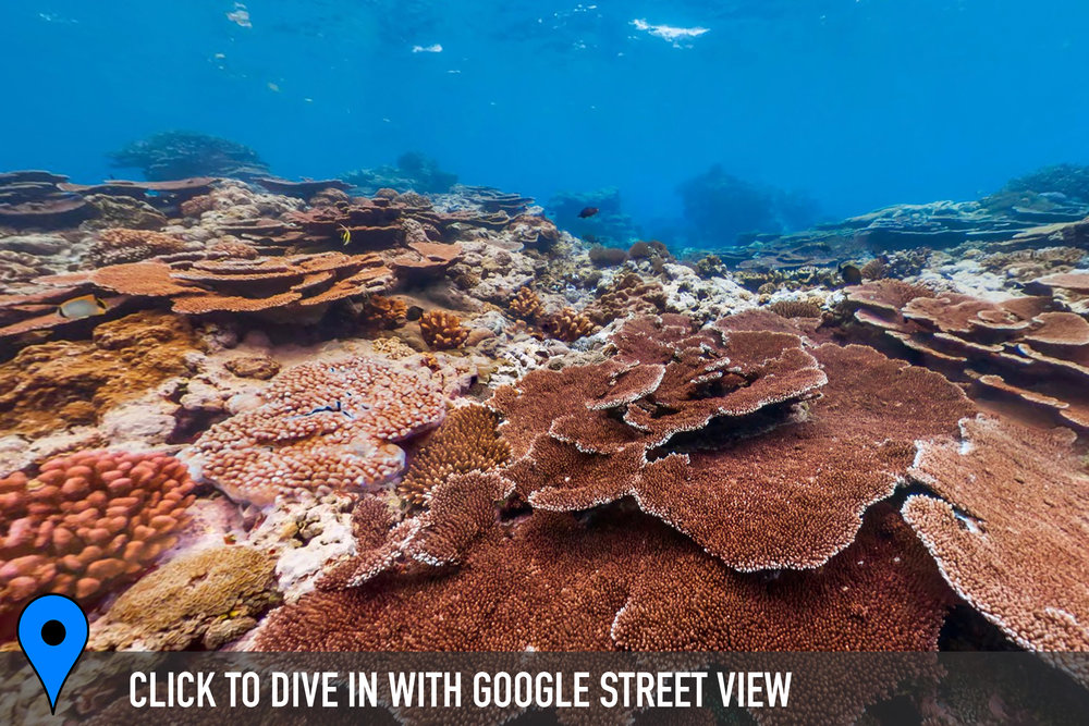 DOWNLOAD   - fagatele bay, american samoa Credit: THE OCEAN AGENCY / XL CATLIN SEAVIEW SURVEY