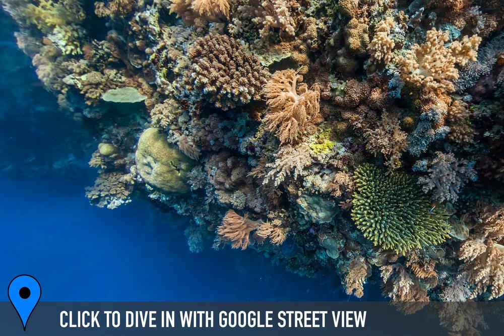 DOWNLOAD   - jessie beazley reef, philippines Credit: THE OCEAN AGENCY / XL CATLIN SEAVIEW SURVEY