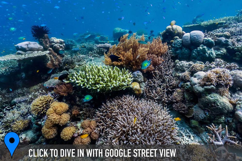 keruo, raja ampat, indonesia Credit: THE OCEAN AGENCY / XL CATLIN SEAVIEW SURVEY