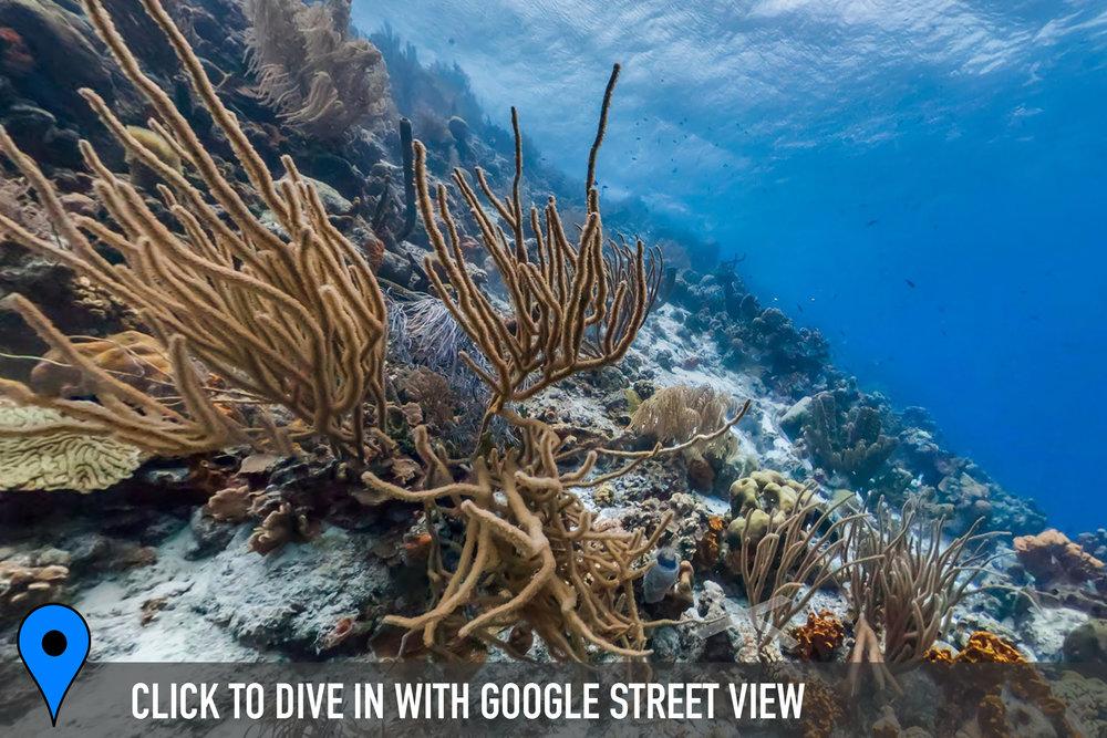 DOWNLOAD   - klein bonaire, bonaire Credit: THE OCEAN AGENCY / XL CATLIN SEAVIEW SURVEY