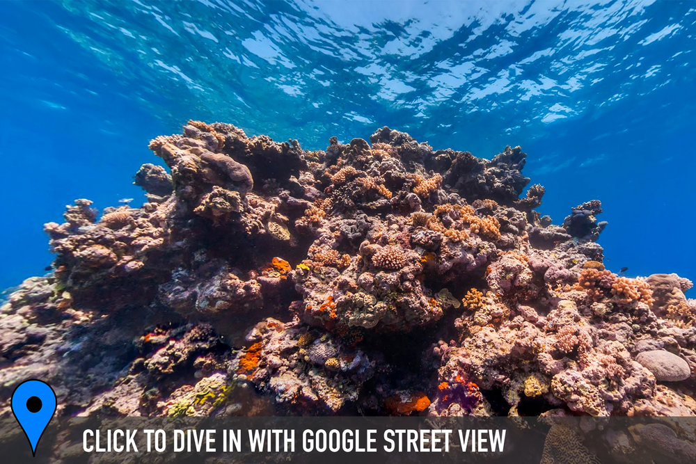 DOWNLOAD   - knife reef, great barrier reef Credit: THE OCEAN AGENCY / XL CATLIN SEAVIEW SURVEY