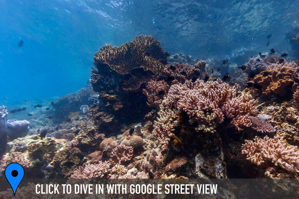 DOWNLOAD   - norman reef, great barrier reef Credit: THE OCEAN AGENCY / XL CATLIN SEAVIEW SURVEY