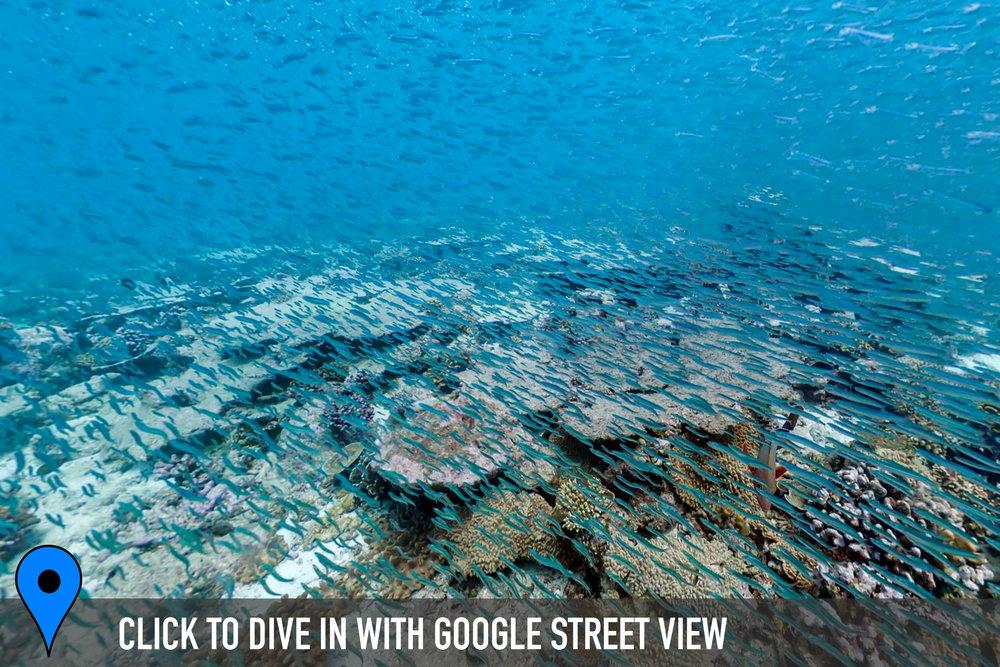 nelson island, chagos Credit: THE OCEAN AGENCY / XL CATLIN SEAVIEW SURVEY