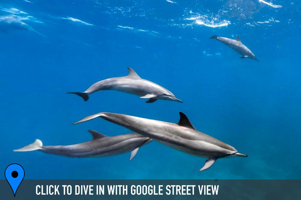 canal-da-sela-ginete, brazil credit: THE OCEAN AGENCY / XL CATLIN SEAVIEW SURVEY