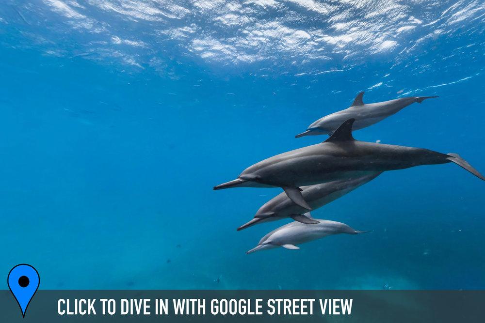 canal da sela ginete, brazil credit: THE OCEAN AGENCY / XL CATLIN SEAVIEW SURVEY