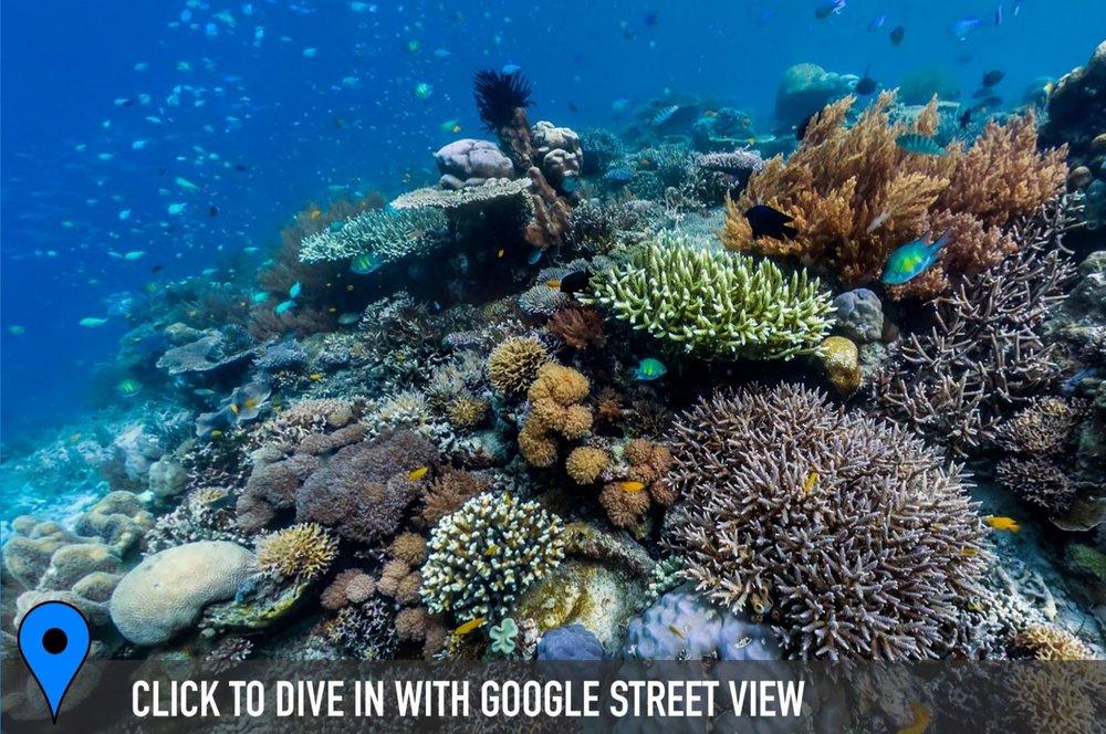 DOWNLOAD   -keruo, raja ampat, indonesia Credit: THE OCEAN AGENCY / XL CATLIN SEAVIEW SURVEY