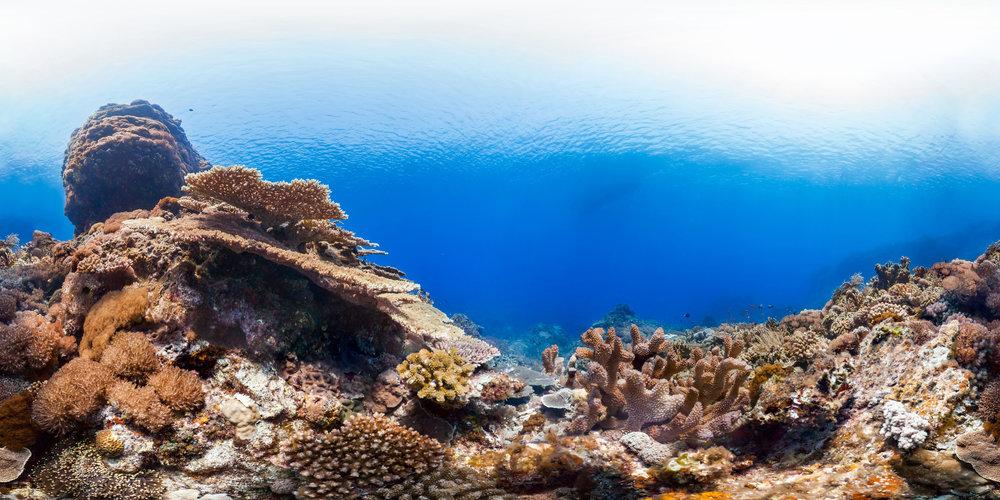 taiwan Credit: THE OCEAN AGENCY / XL CATLIN SEAVIEW SURVEY