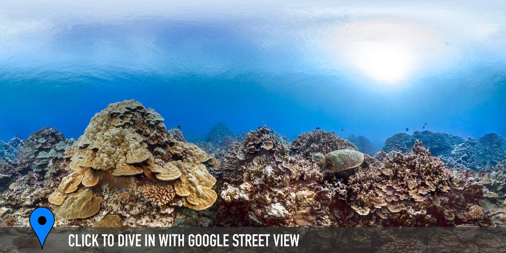 pue coral gardens, cook islands Credit: THE OCEAN AGENCY / XL CATLIN SEAVIEW SURVEY