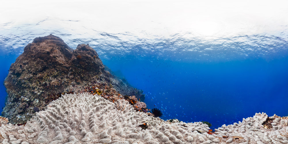 Vanuatu Credit: THE OCEAN AGENCY / XL CATLIN SEAVIEW SURVEY