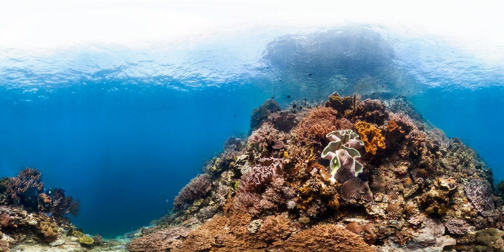 DOWNLOAD   - manado, indonesia  Credit: THE OCEAN AGENCY / XL CATLIN SEAVIEW SURVEY