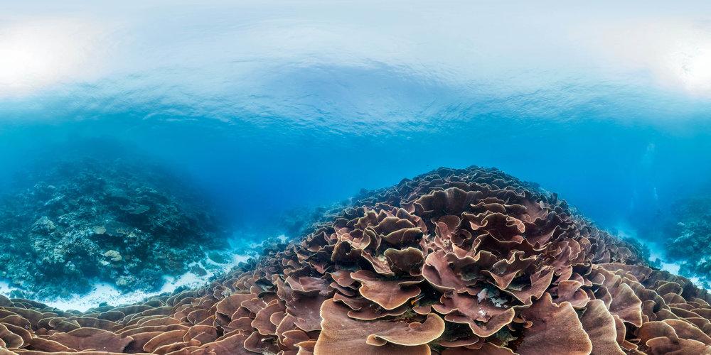 palau Credit: THE OCEAN AGENCY / XL CATLIN SEAVIEW SURVEY